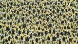 Viscose Retro Dots Yellow _
