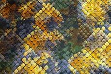 Viscose Jersey Digital Schub Yellow