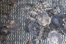Viscose Jersey Flockprint Flower Knit Grey