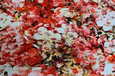 Cotton Jersey Digital Flowers Red