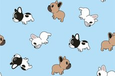 Cotton Jersey Tiny Bulldogs Light Blue